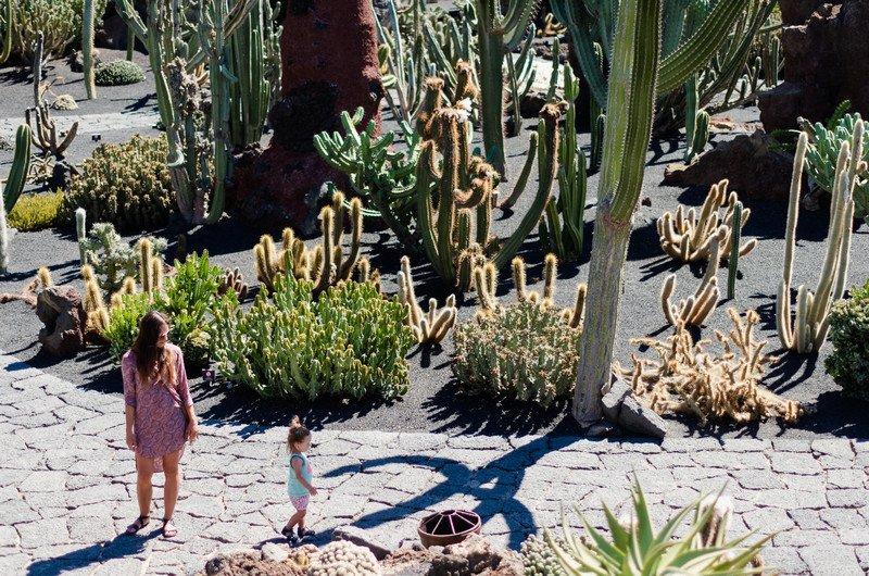 kaktusy-charco-verde-i-yaiza-004