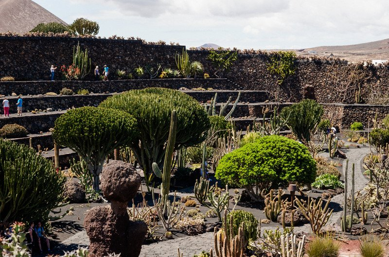 kaktusy-charco-verde-i-yaiza-019