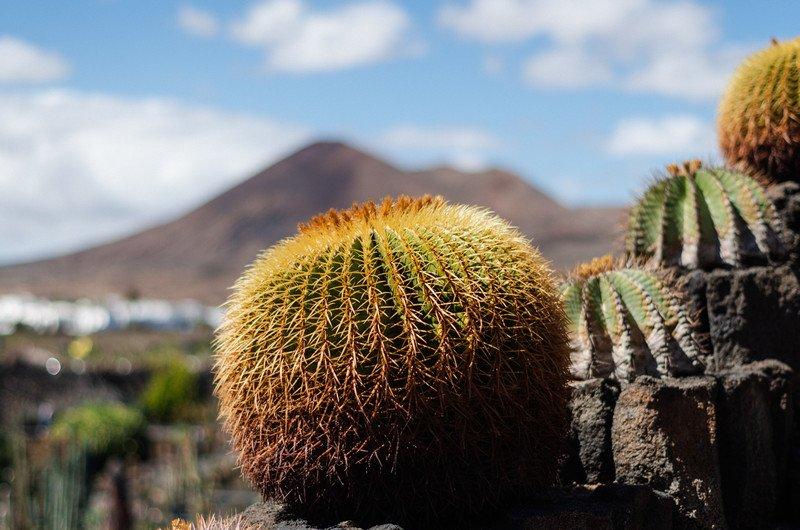 kaktusy-charco-verde-i-yaiza-022