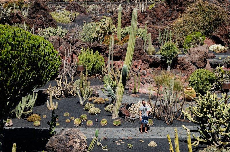 kaktusy-charco-verde-i-yaiza-033
