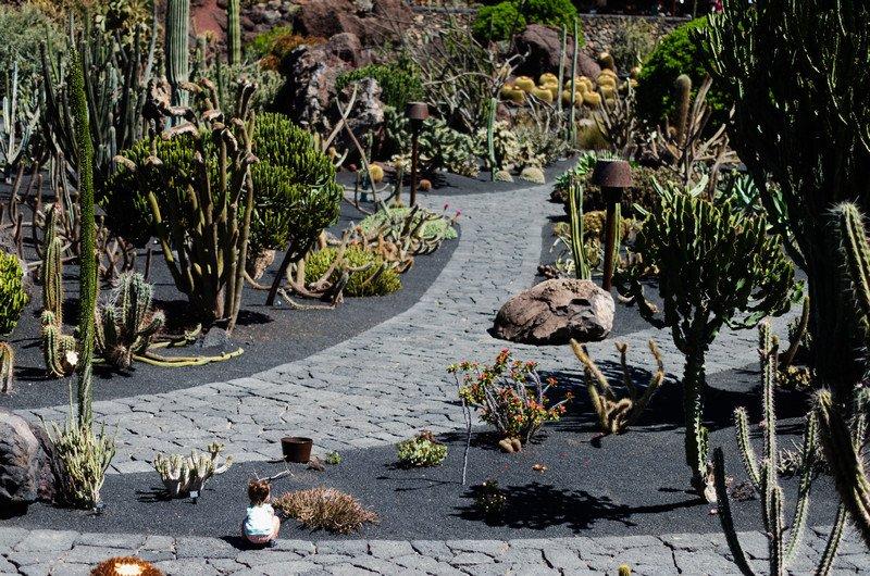 kaktusy-charco-verde-i-yaiza-038