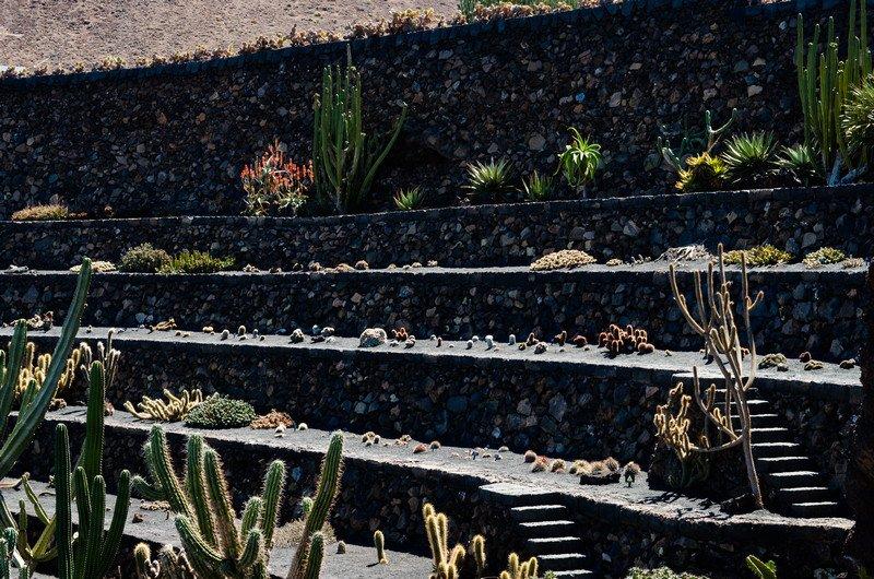 kaktusy-charco-verde-i-yaiza-040