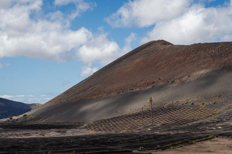 kaktusy-charco-verde-i-yaiza-052