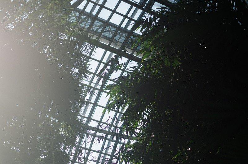 reichstag,-botanic-037