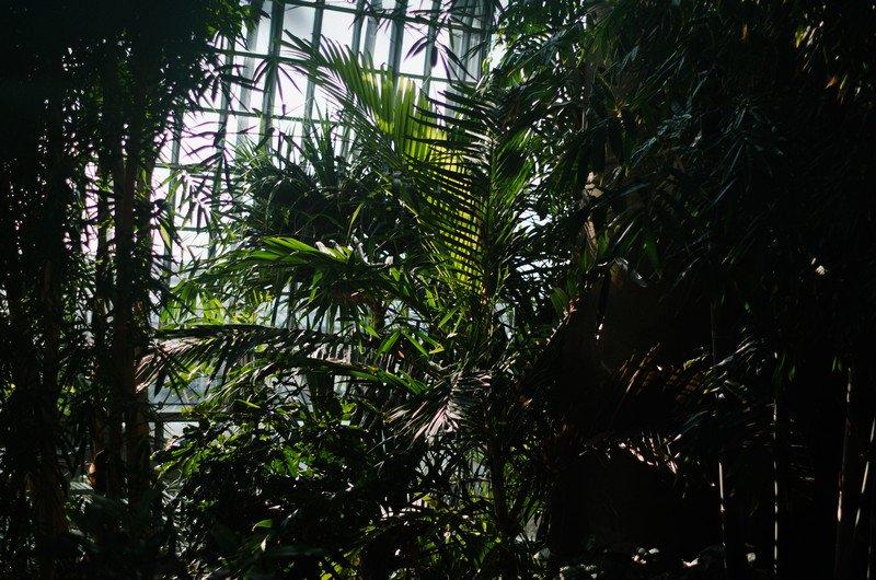 reichstag,-botanic-040