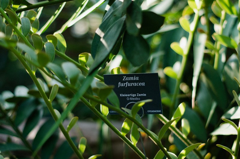 reichstag,-botanic-041