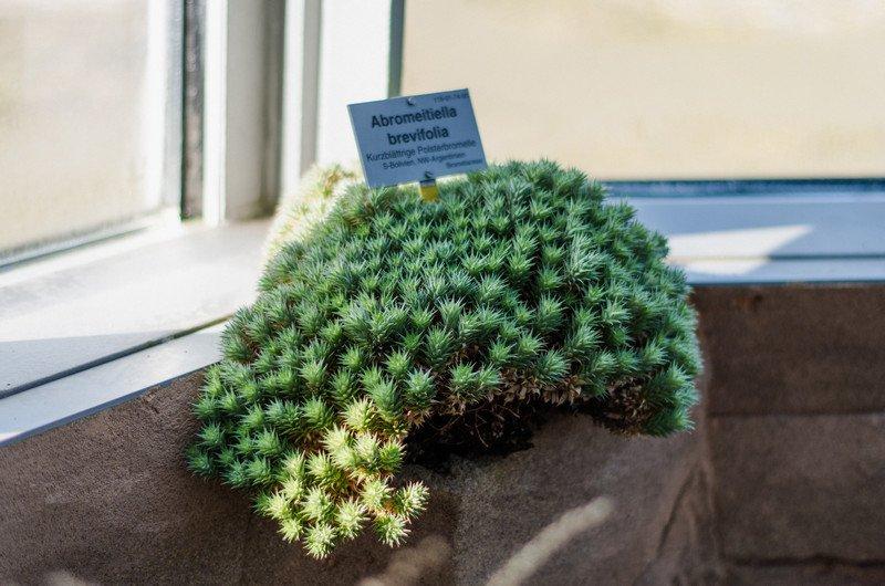 reichstag,-botanic-046