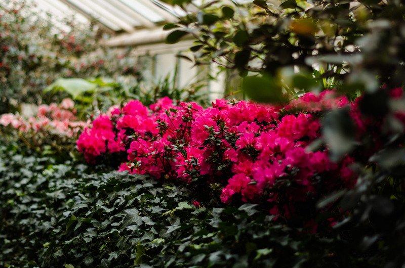 reichstag,-botanic-047