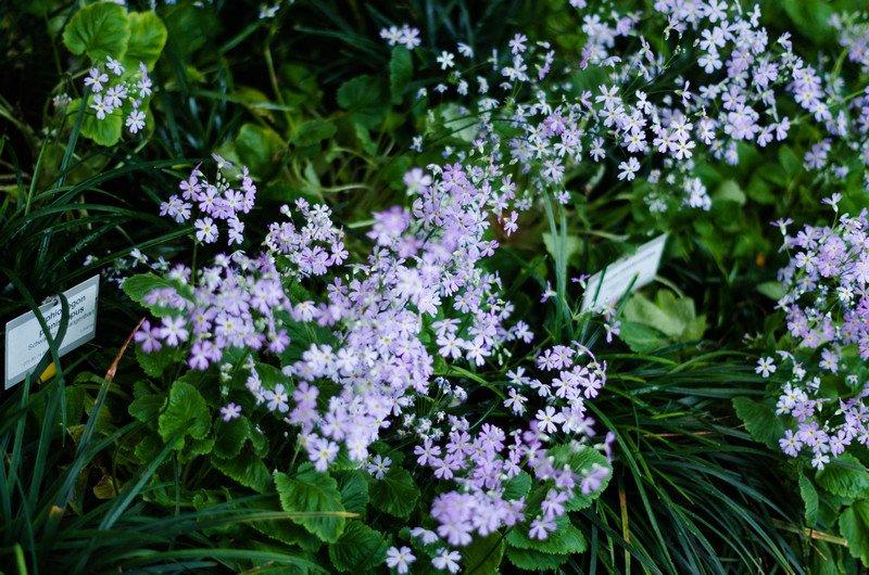 reichstag,-botanic-052