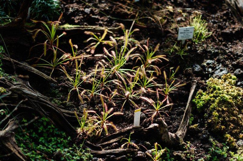 reichstag,-botanic-062